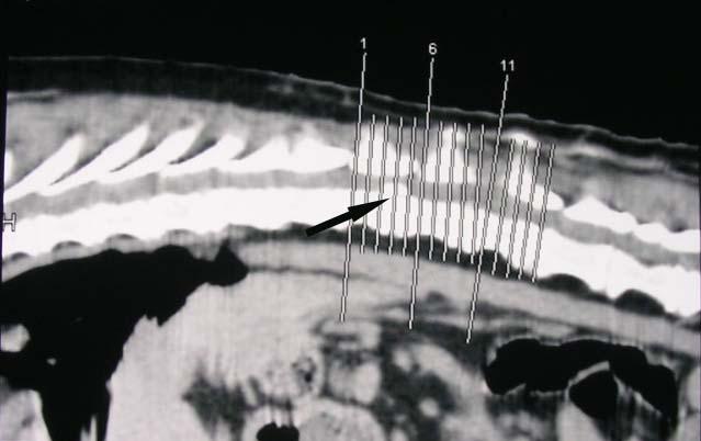 Компьютерная томография грудного отдела собаки при экструзии диска