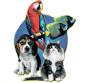 Доклад на тему «Патологии суставов у собак»