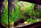 Все по созданию аквариума