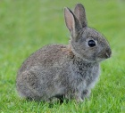 Советы по содержанию и разведению кроликов