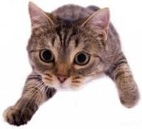 Агрессивность кошек
