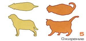 Ожирение у собаки и кошки