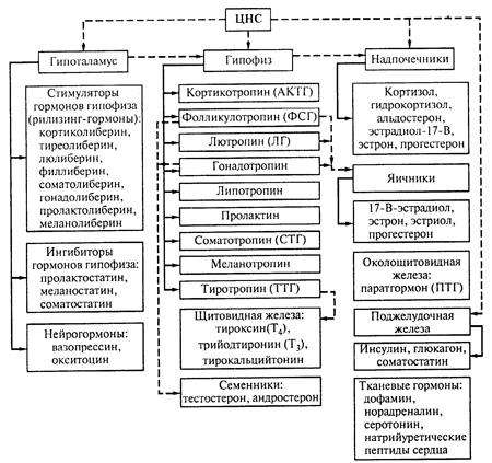 Механизмы регуляции гормонов