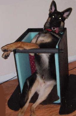 Кормление собаки с расширением пищевода