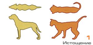 истощение собаки