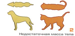 недостаточная масса у собаки и кошки