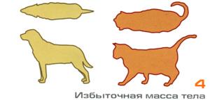 избыточный вес у собаки и кошки