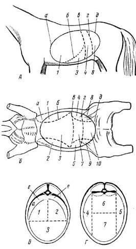 Схема деления брюшной полости на области