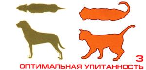 нормальный вес собаки и кошки