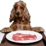 Кормление собаки — рекомендации и полезные советы по правильному натуральному кормлению собаки