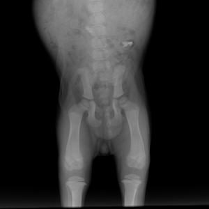 Small Skeletal   10 kg Tarsus LAT 27.09.2018 13 24 58 978